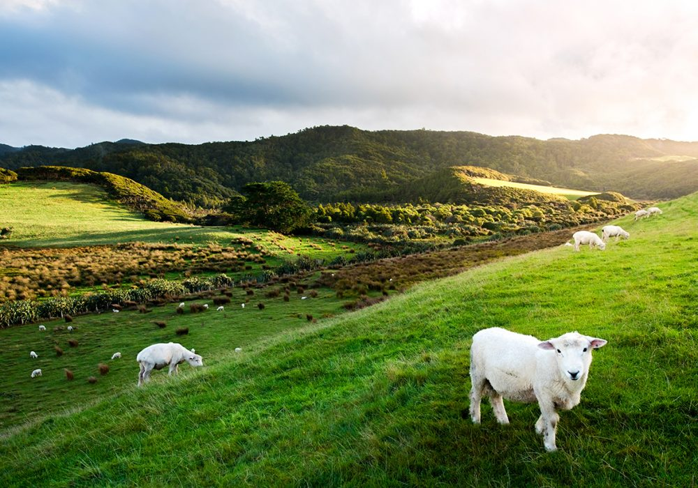 How to Get the Best of New Zealand in One Road Trip