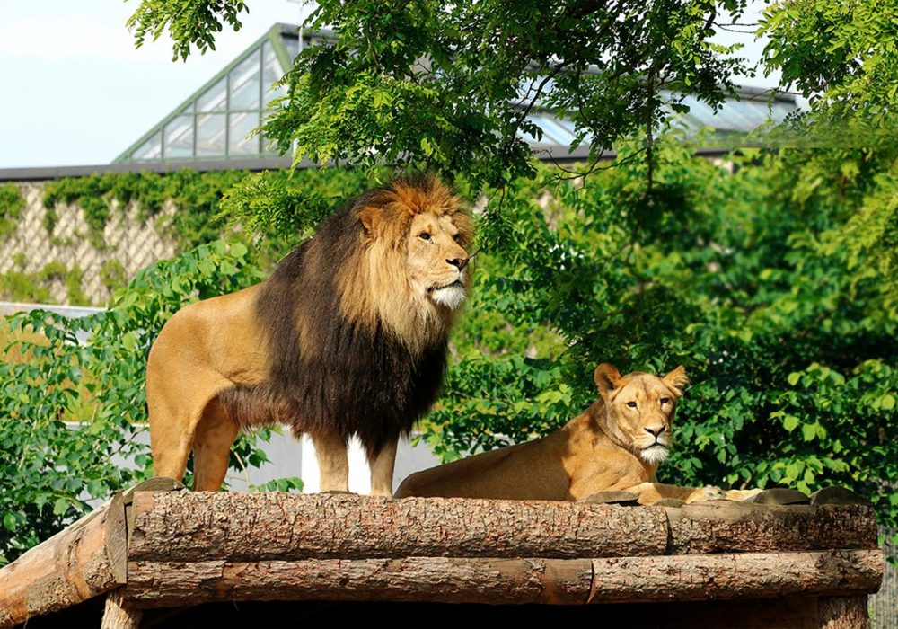 Best Zoos in the World