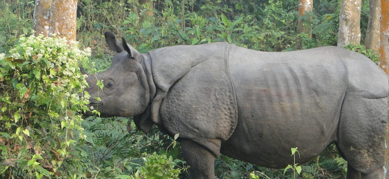 Explore 2 Natural UNESCO World Heritage Sites in Nepal – Sagarmatha and Chitwan National Park