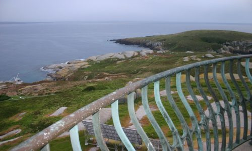 Things You Must See and Do on Montague Island