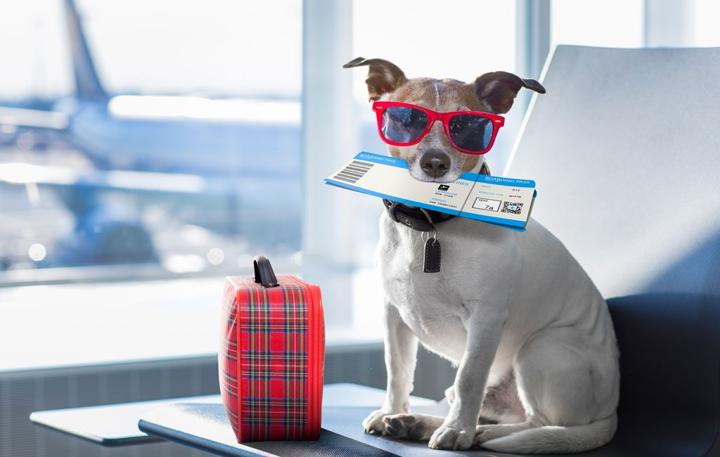 Top Tips for Traveling with Your Dog